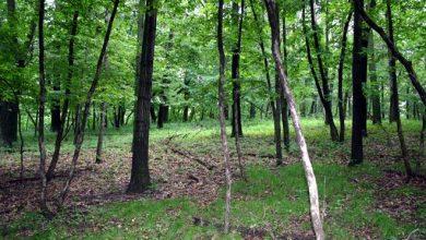 Photo of वनक्षेत्र तथा वन्यजन्तु संरक्षणका लागि छलफल