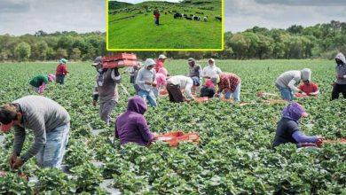 Photo of कृषिमा ६ वर्षमा ६० अर्ब अनुदानस् ३५ प्रतिशत कर्मचारीलाई कमिसन