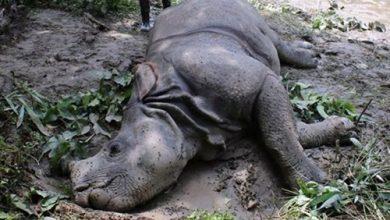 Photo of चितवन राष्ट्रिय निकुञ्जमा गैडा मृतावस्थामा फेला