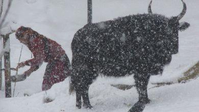 Photo of हुम्लामा पुनः हिमपात, तापक्रम माइनस पाँच डिग्री