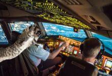 Photo of कतारका लागि उडेको विमानमा बिरालोले पाइलटलाई आक्रमण गरेपछि आकस्मिक अवतरण