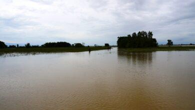 Photo of उठाउने बेलाको धानबाली वर्षाले सखाप, चिन्तामा किसान